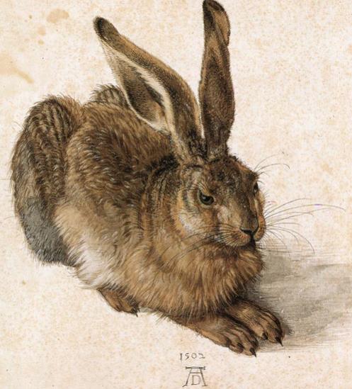 Hare, Durer 1502